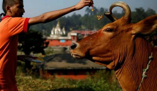 cow-legal guardians> </a>    <span style=